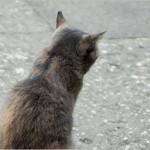 老けて見える!?猫背の治し方とは?筋トレは効くの?